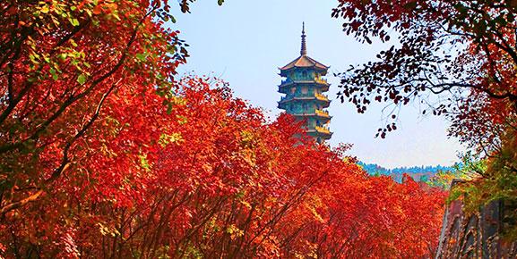 红叶谷景区电话_红叶谷生态文化旅游区,济南红叶谷